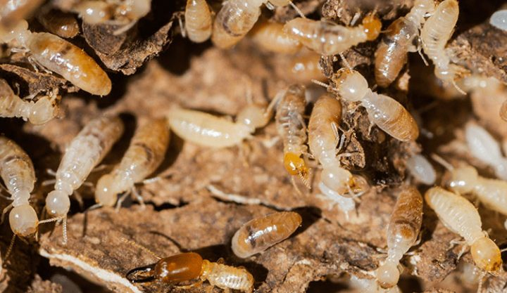 Termite Control Tips & Advice